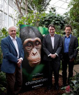 Chimpanzee-Interview