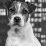 Uggie-hits-the-UK,-star-of-the-Oscar-favourite-The-Artist